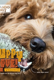 Meet Waffles, our Puppy Love cover-model contest winner