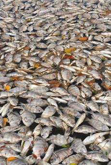 Thousands of fish are dying at Indian River Lagoon
