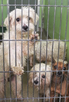 A local woman dropped off 27 dogs at Orange County Animal Services last night