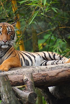 Palm Beach zookeeper dies after tiger attack