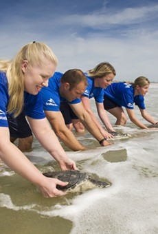 SeaWorld Orlando returns 9 rescued sea turtles to Florida waters