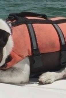 The luckiest dog in the history of dogs was found swimming 5 miles off the Florida coast