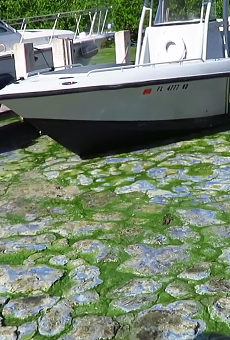 This video shows how gross Florida's toxic algae bloom problem really is