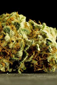 Knox Medical opens new marijuana dispensary in Casselberry tomorrow