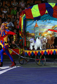 The Menestrolli Dog Circus is coming to Artegon this weekend