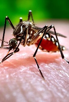 Orlando theme parks are now giving out free insect repellent due to Zika virus (2)
