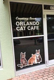 Orlando Cat Cafe will open this Thursday