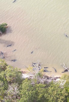 Massive pod of whales currently stranded off the coast of Florida