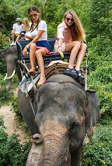 New state rules will fence in Florida elephant rides