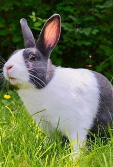 Second Bunny Cafe planned for The Nook with Orlando Rabbit Care & Adoptions