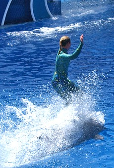 A SeaWorld trainer rides a dolphin