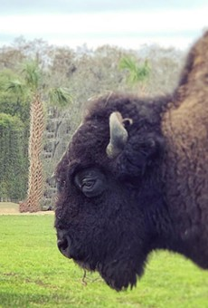 Osceola County drive-thru safari park remains open during coronavirus shutdowns