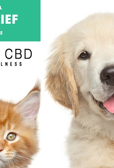 10 best CBD oils for dogs to treat your pet with
