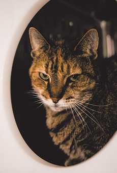 Meet Lilah, a 4-year-old kitty who's a little shy at first, but is very sweet once she warms up