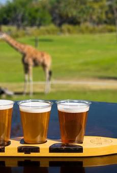 The Giraffe Bar at Busch Gardens opens its doors on March 19.