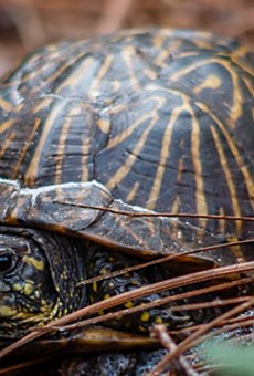 Florida woman hit in the head when flying turtle shattered her windshield