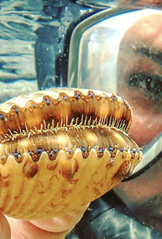 Scalloping season will be running from July 1 through September 24 in Citrus County.