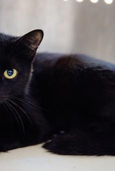 Kitty (A473241)