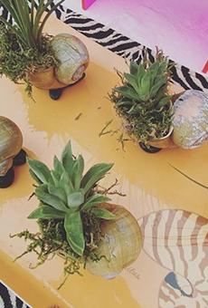 Bazaar Botanica to hold spooky market in October