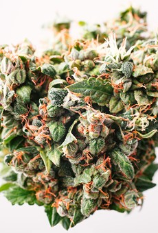 A rundown of all the proposed marijuana bills in the current Florida legislative session