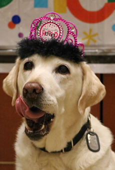 Orlando International Airport gives service dog a well-deserved retirement party