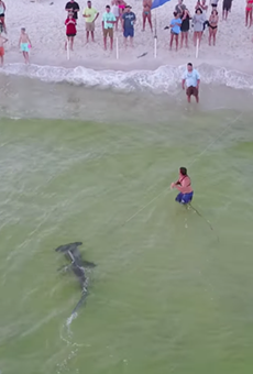 Watch this fisherman land a massive hammerhead from a Florida beach