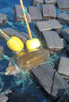 Florida authorities rescue sea turtle tangled in $53 million worth of cocaine