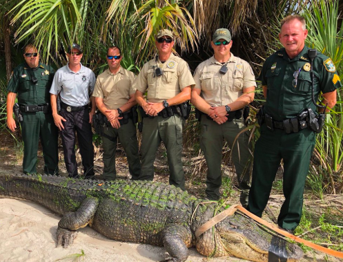 PHOTO VIA SARASOTASHERIFF/TWITTER