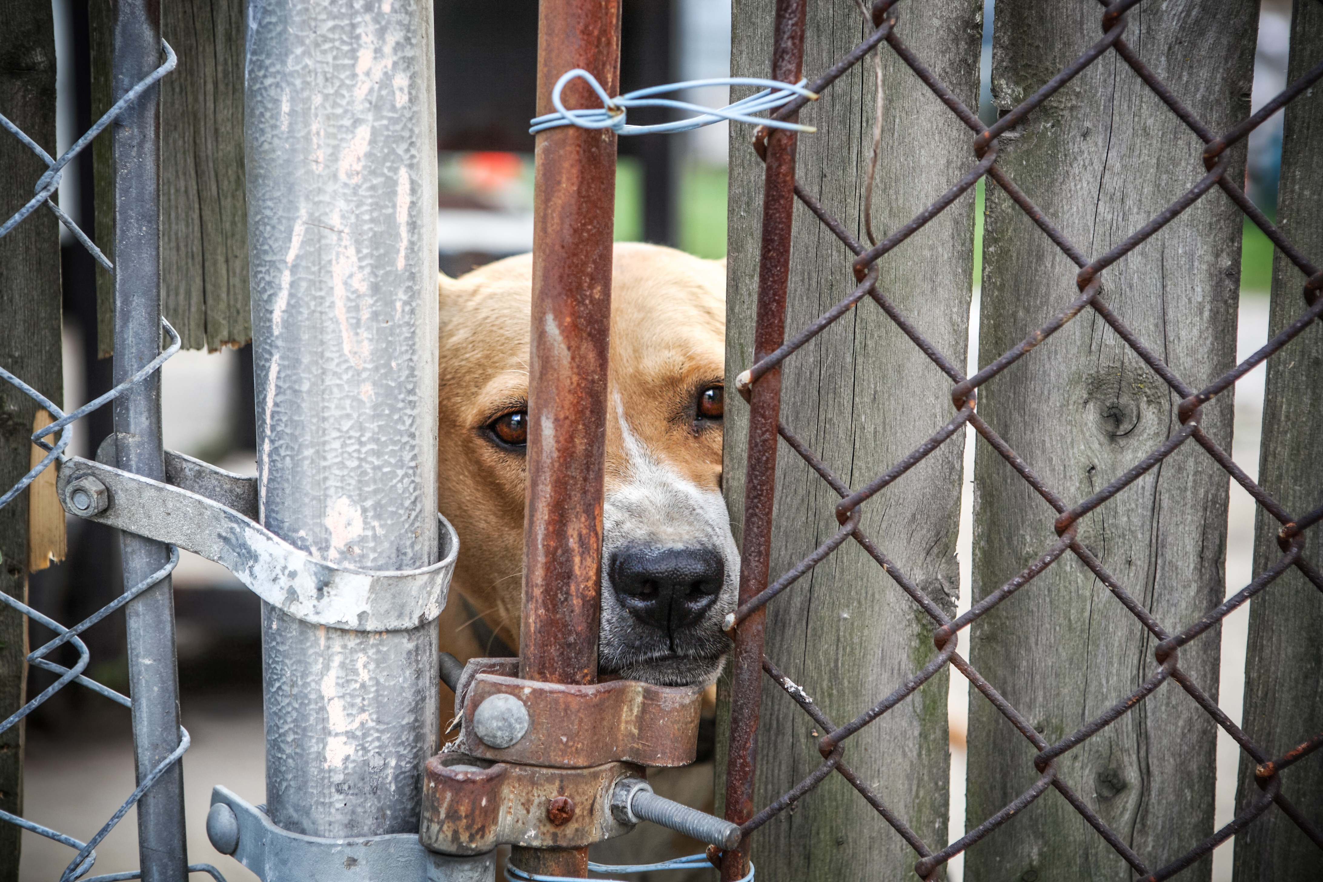 Volusia County unanimously approves animal abuse registry