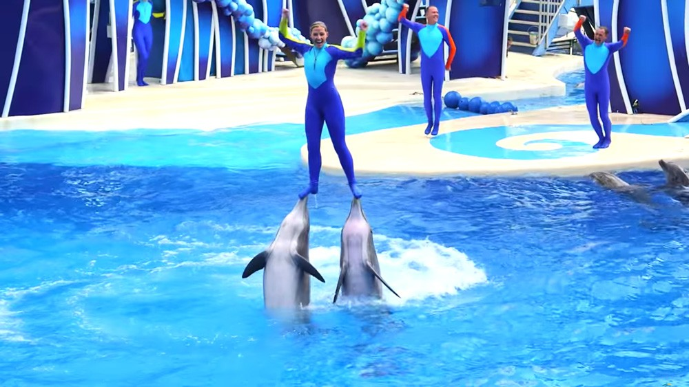 SCREENSHOT VIA SEAWORLD ORLANDO, AQUATICA & DISCOVERY COVE/YOUTUBE