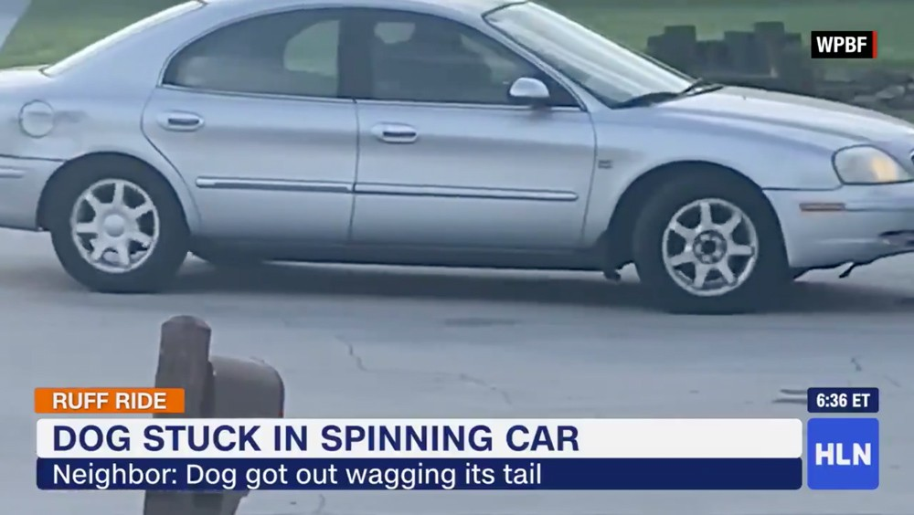 A dog drove doughnuts in a car for an hour