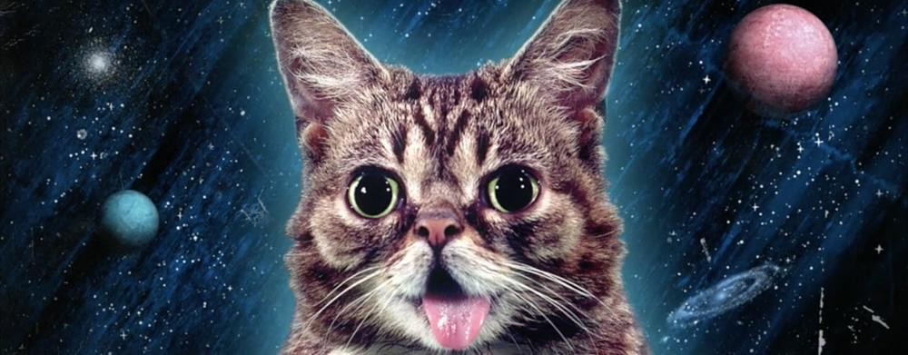 A photo illustration of Lil Bub from her record label - PHOTO VIA JOYFUL NOISE RECORDINGS