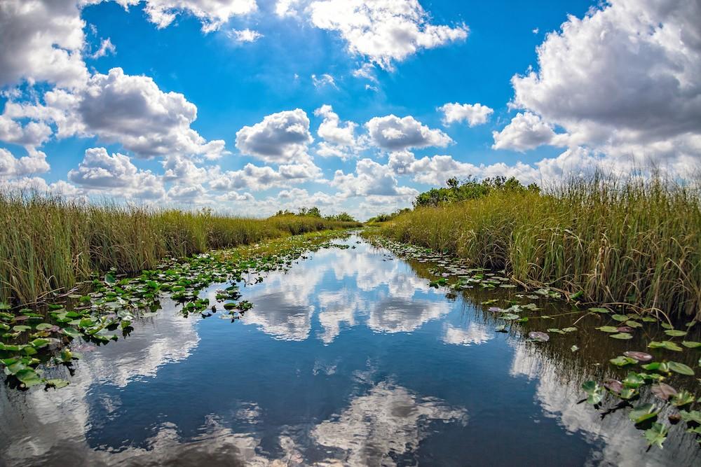 Resultado de imagen de everglades florida