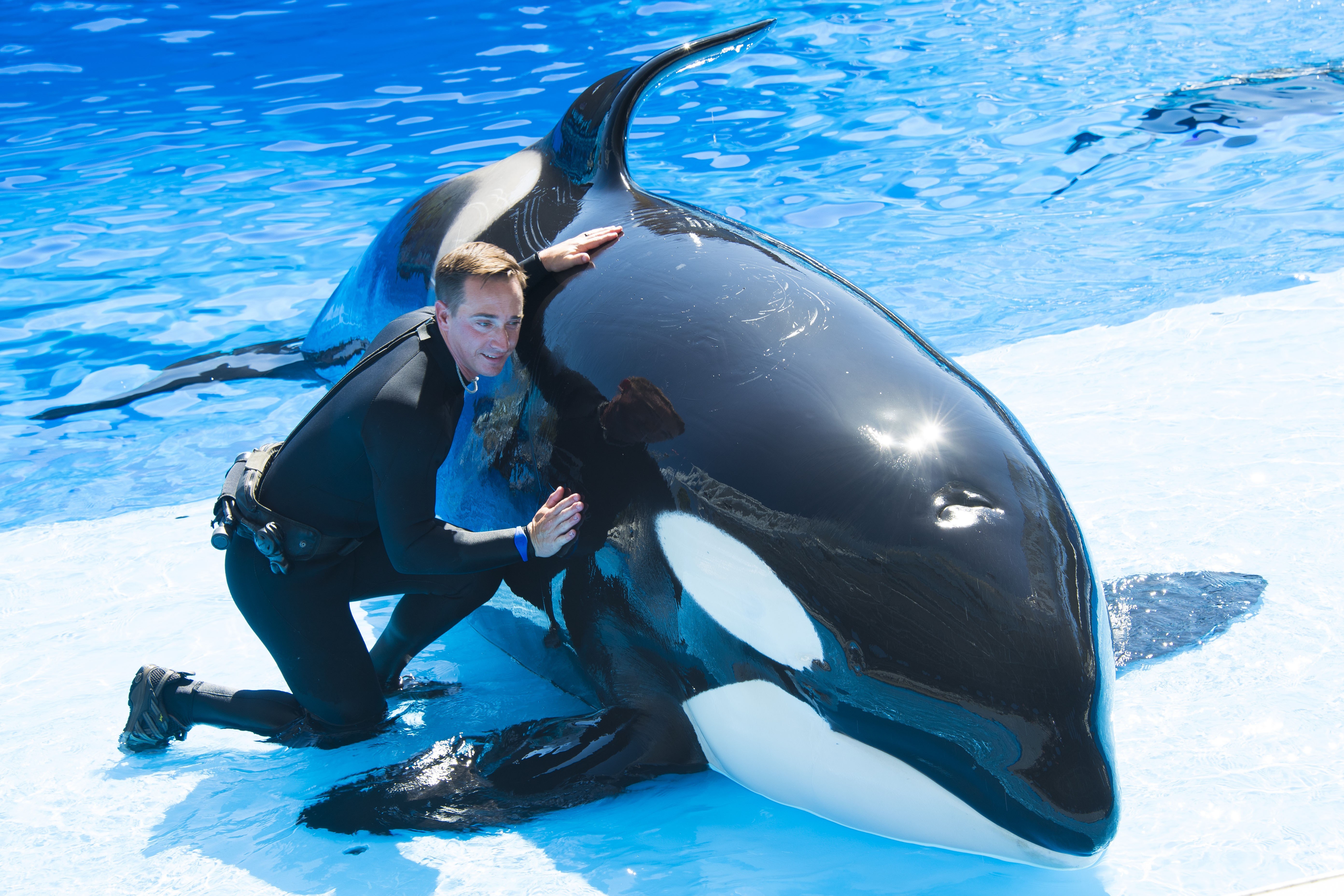 seaworld's latest tour lets you get up-close with killer whales | blogs