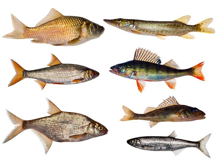 gal_sel_seven_fishes_shutterstock_64844494.jpg