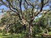 Mead Botanical Garden, Winter Park