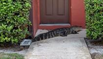 Authorities capture 9-foot alligator on doorstep of Florida home