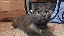 Gimme Shelter: Meet Aurora!