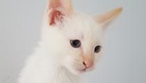 Gimme Shelter: Meet Thumper!