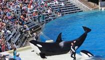 SeaWorld had a horrible July