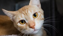 Gimme Shelter: Meet Big Scuba!