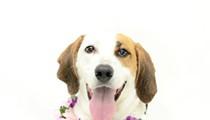 Gimme Shelter: Meet Lola!