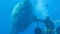 The bravest human in all of recorded history was recently caught on film