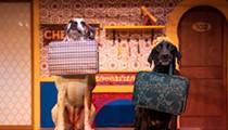 Busch Gardens Tampa debuts a new critter show