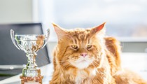 Meet some fine felines at this weekend's ACFA Cat Show in Orlando