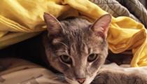 Gimme Shelter: Meet Memphis!