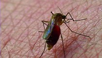 According to recent study, mosquitoes in Orlando aren't even that bad