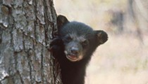 Orlando Police say a black bear was spotted in College Park
