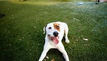Gimme Shelter: Meet Millie!