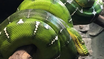 The Central Florida Zoo wants your exotic pets